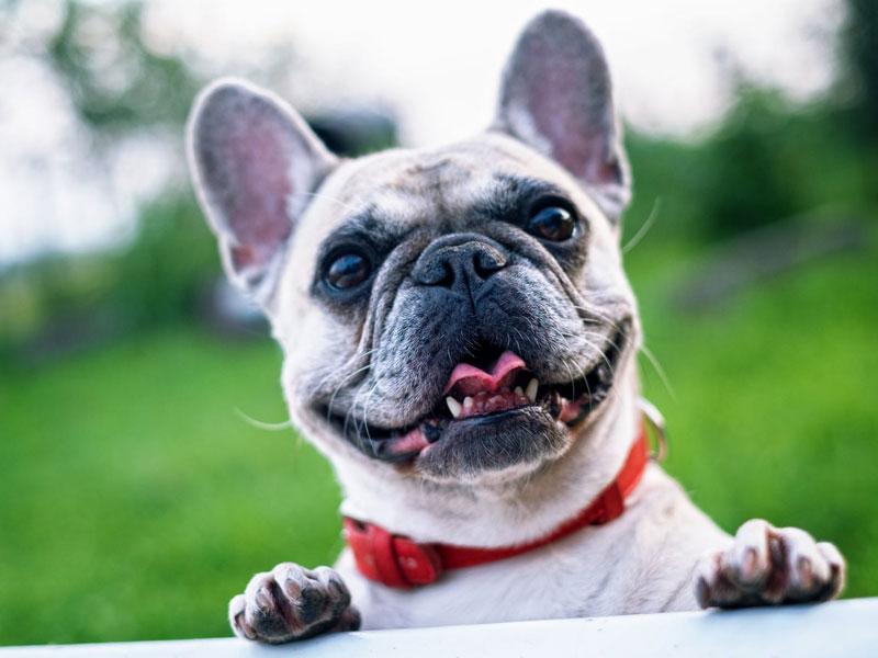 Meet & Greet Pets