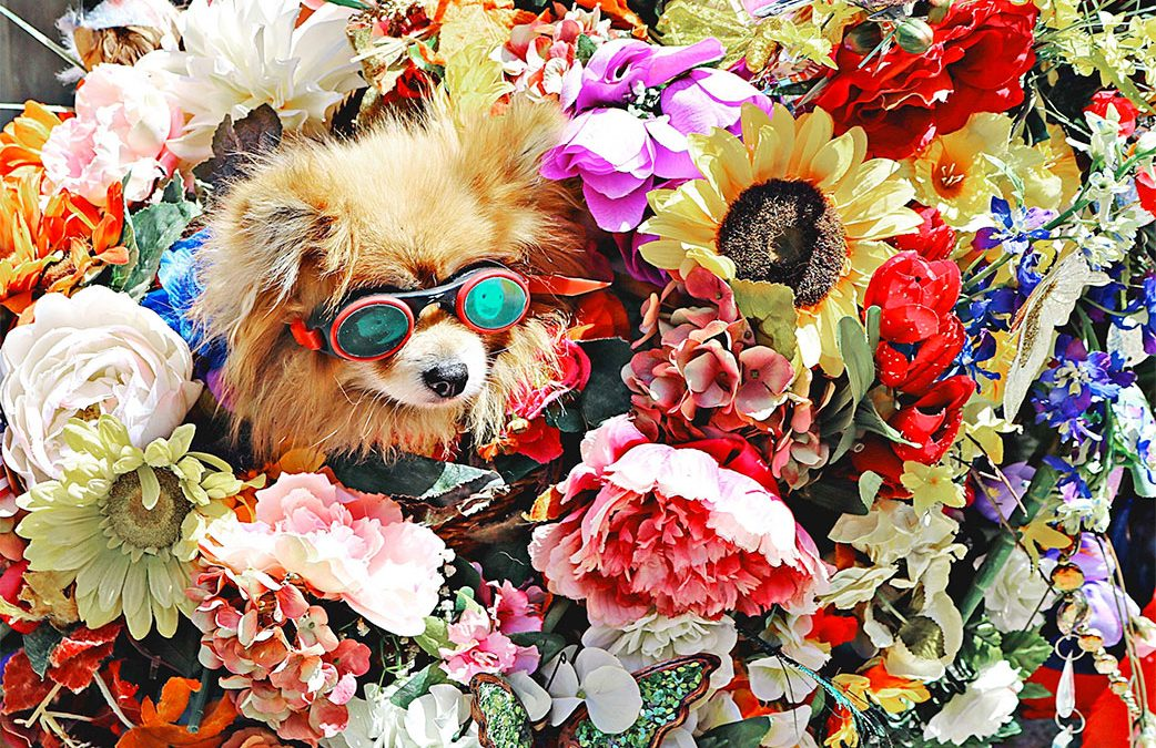 Which Flowers are Poisonous to Dogs?