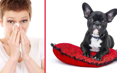 Cleaning Tips For Dog Allergies